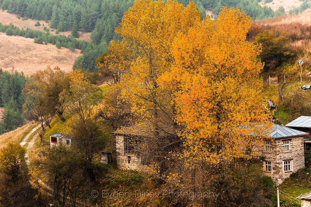 Село Лилково