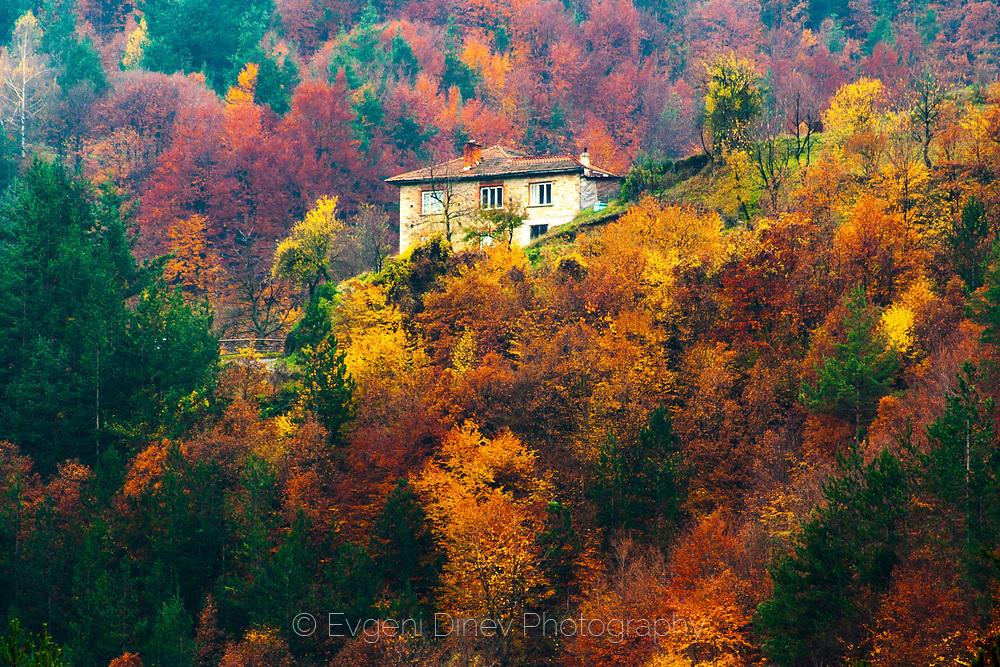 Къща насред пъстра гора