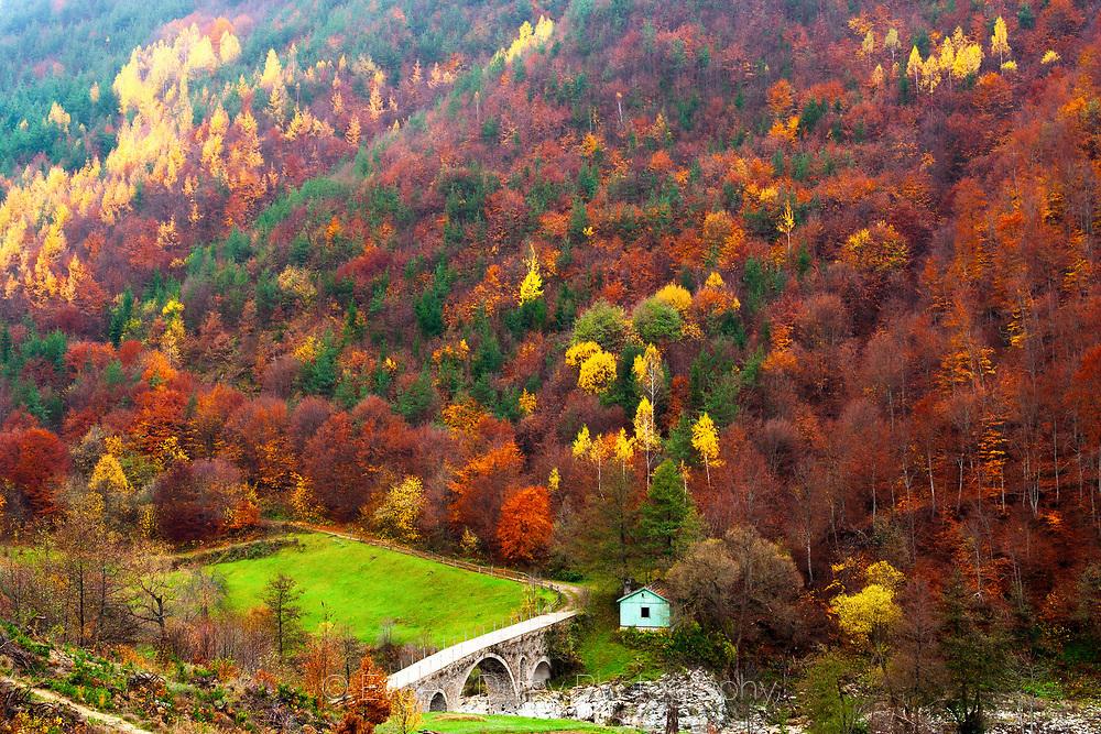 Родопски мост насред пъстра гора