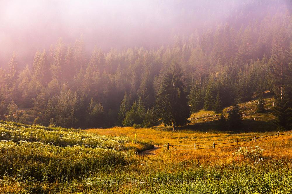 Мъгла и слънце