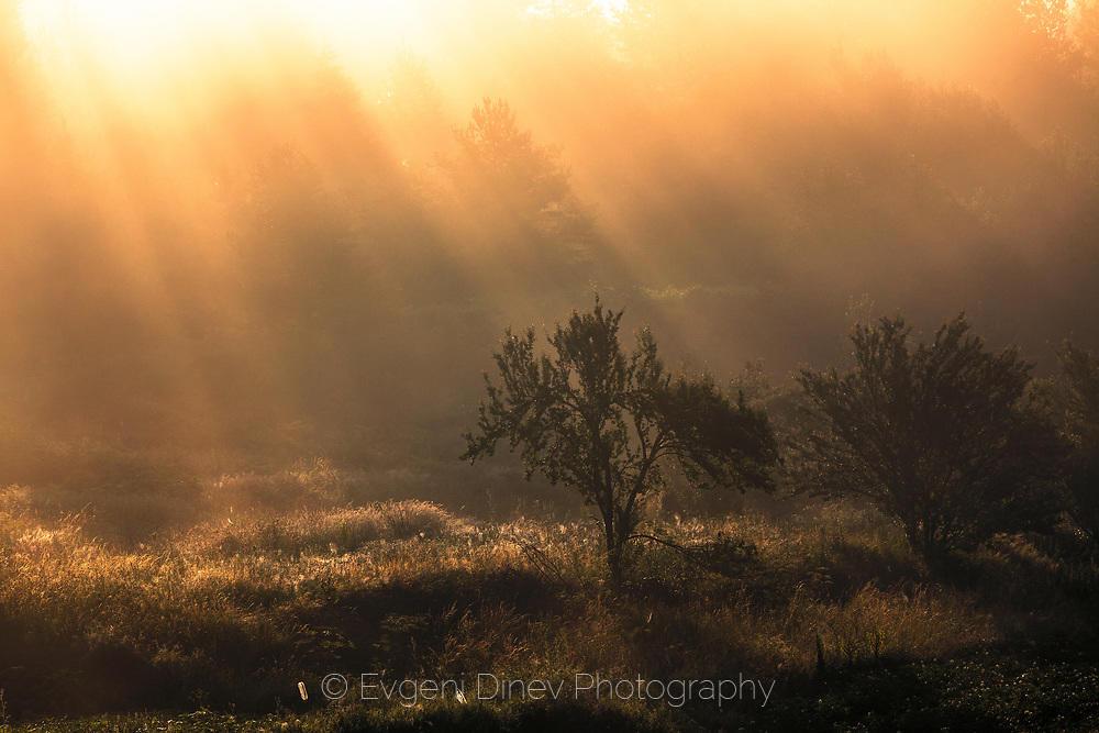 Златна мъгла