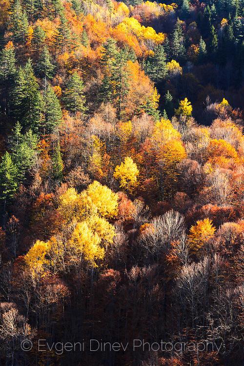 Слънчева гора край язовир Тешел в Родопите