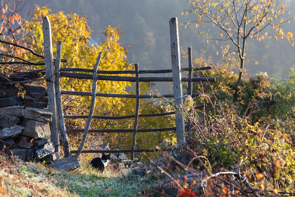Селско коте