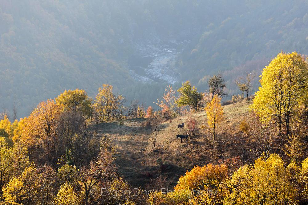 Две магарета на поляна край село Сполука