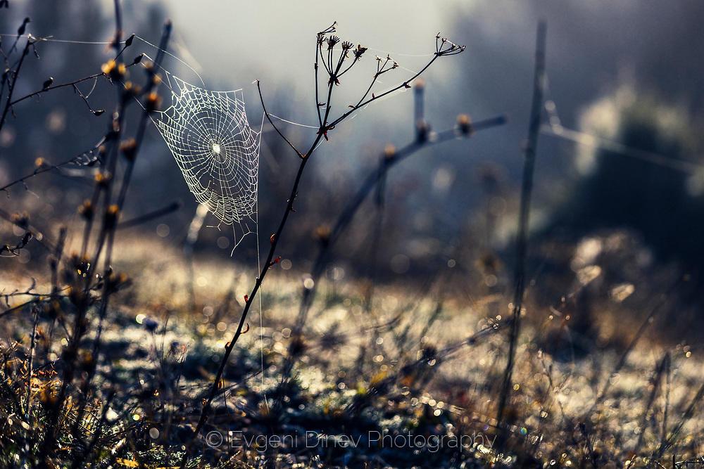 Паяжина с роса разпъната на две клонки