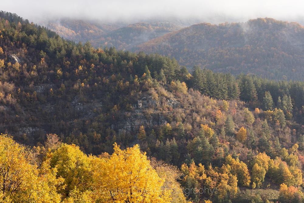 Родопска гора