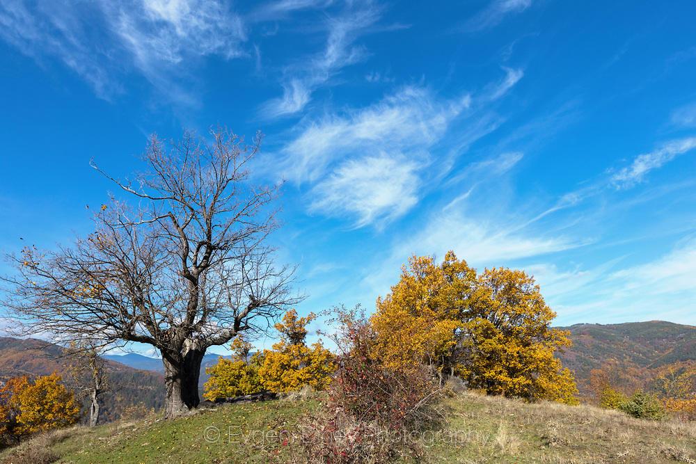 Сухо дърво на синьо небе