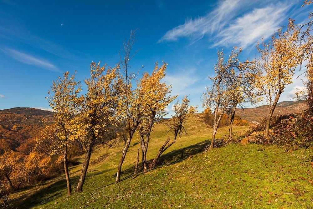 Жълти дръвчета на синьо небе