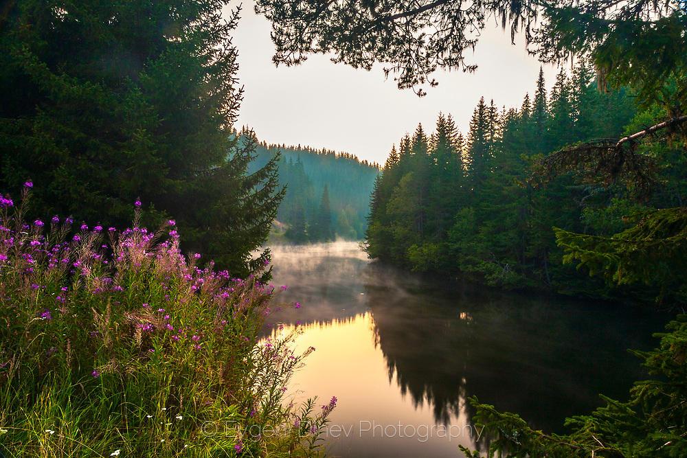 Цветен храст край езеро
