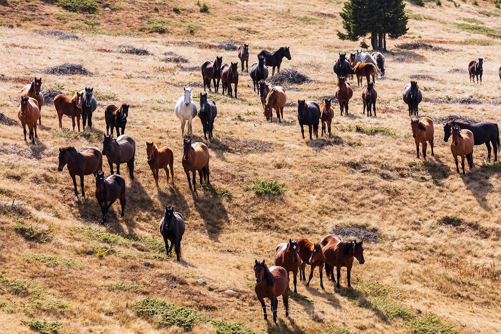 Стадо любопитни коне