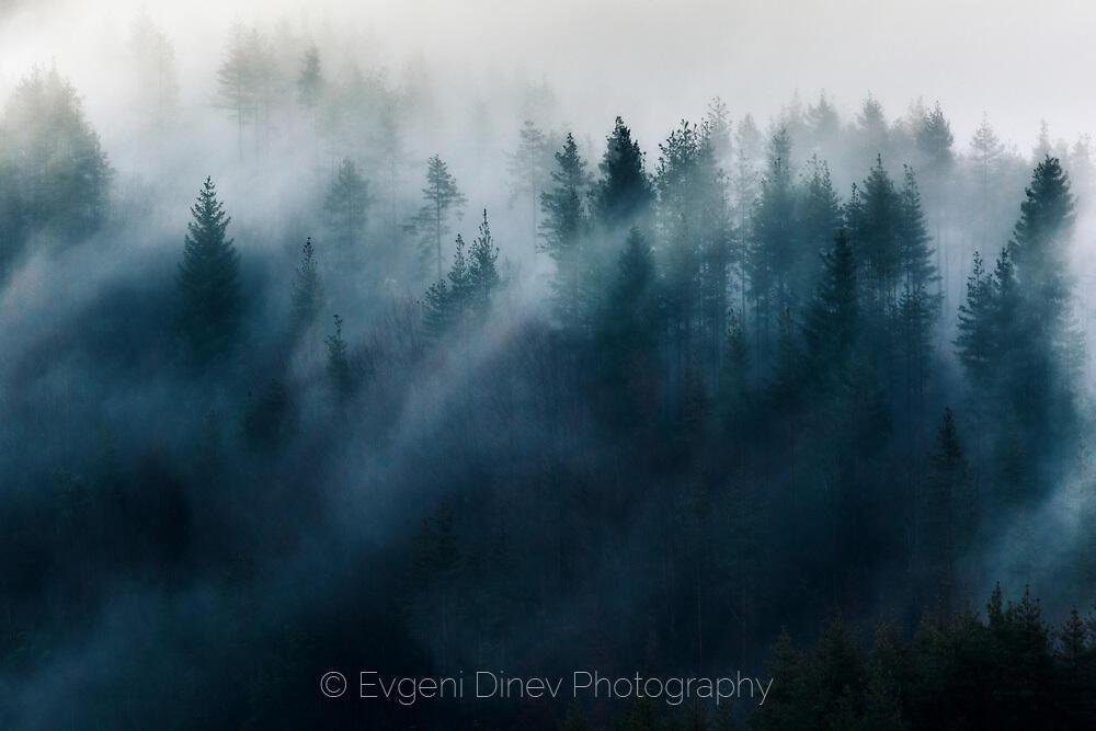 Облаци се крият в гората