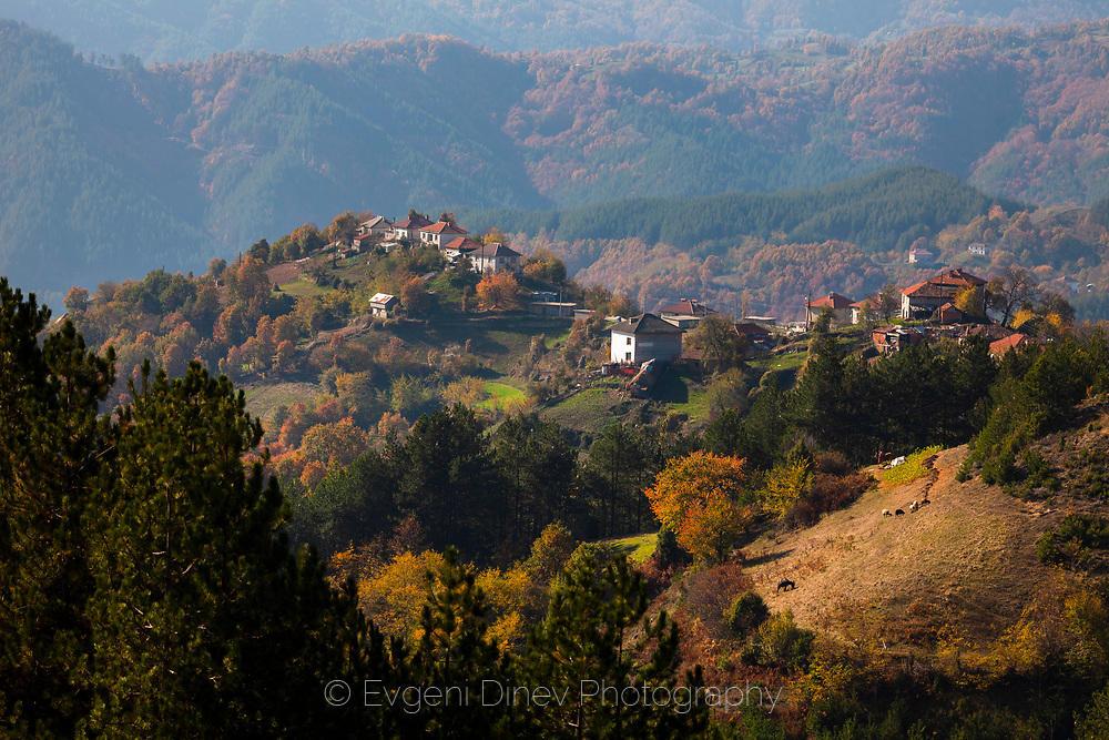 Село Козарка
