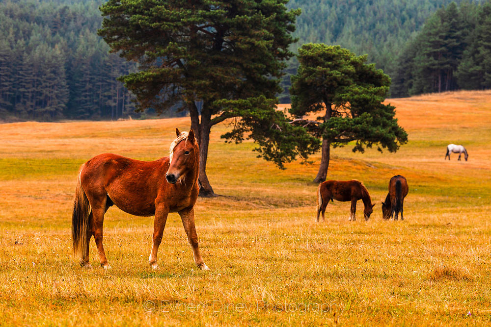 Червен кон с руса грива