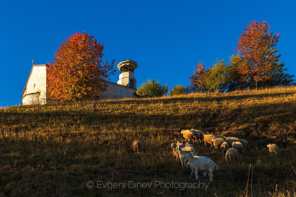 Овце край църква