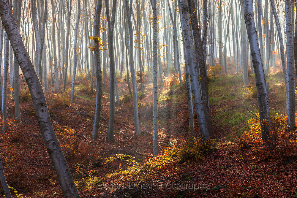 Омагьосаният лес