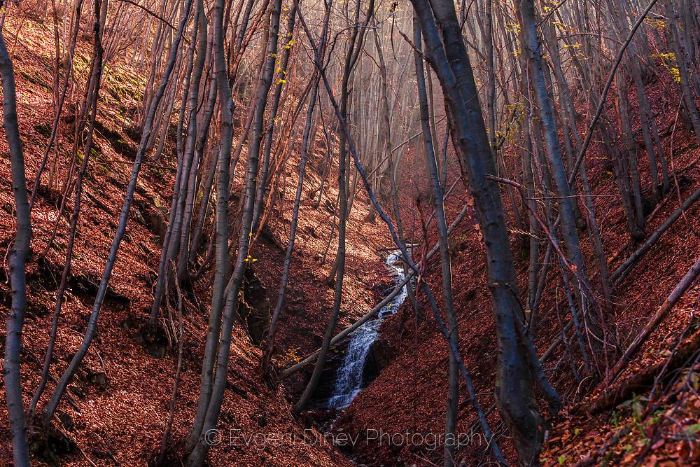 Поток в есенна гора