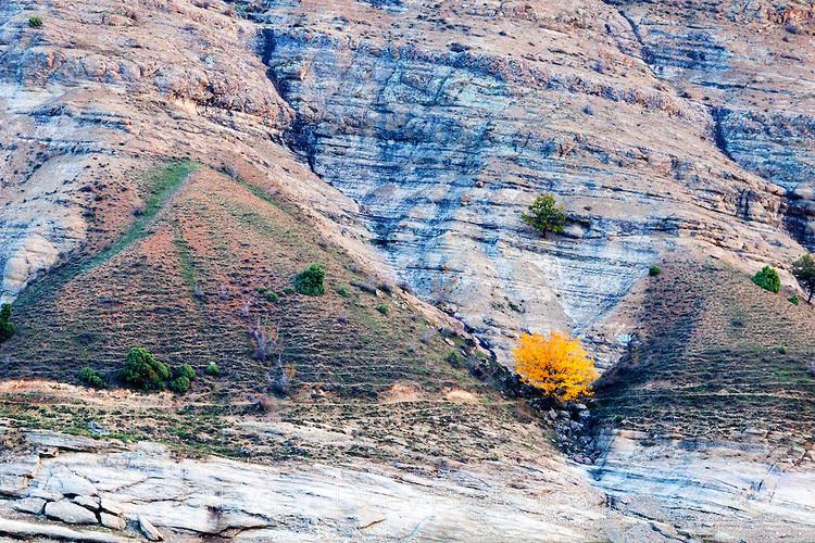Жълто дърво