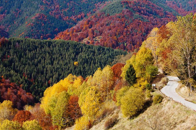 Край село Манастир през есента