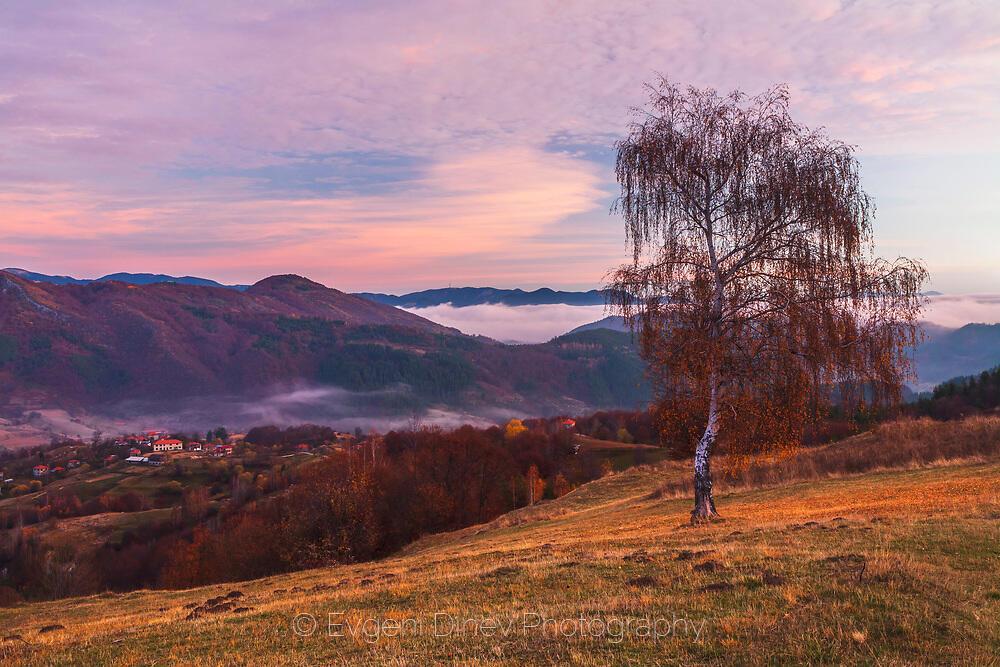 Самотна есенна бреза