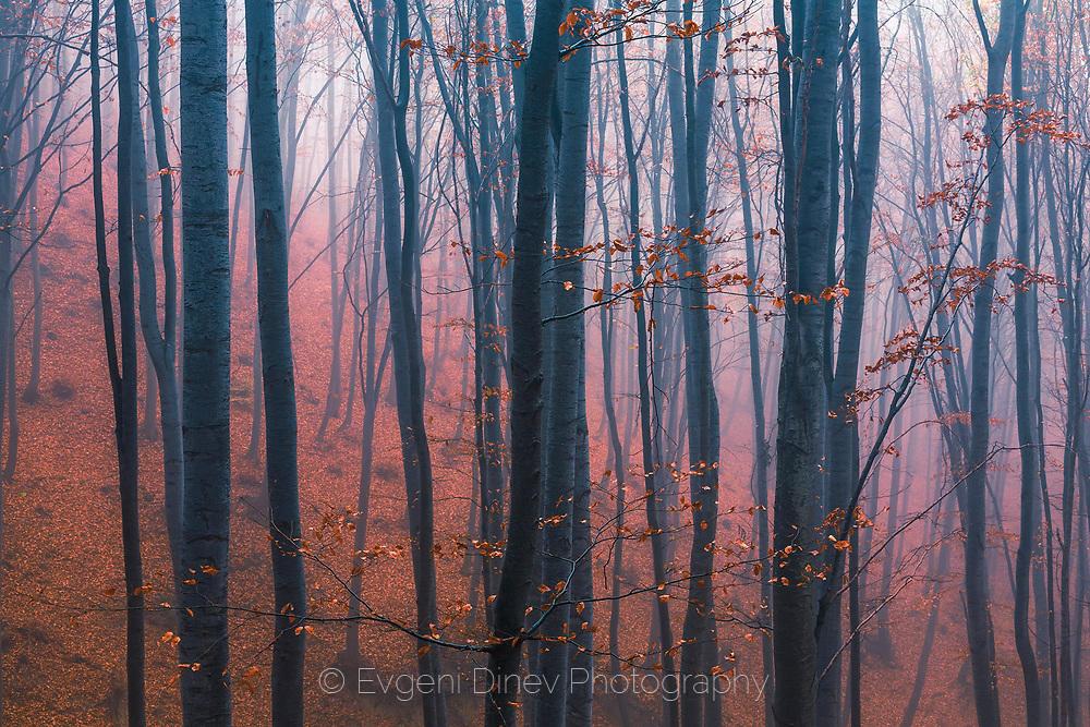 Мъглива родопска гора