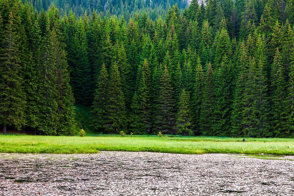 Зеленото езеро