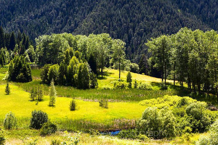 Зелен родопски лес