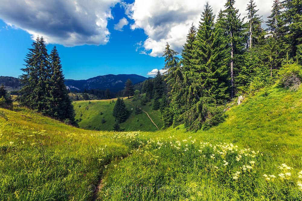 Зелената планина