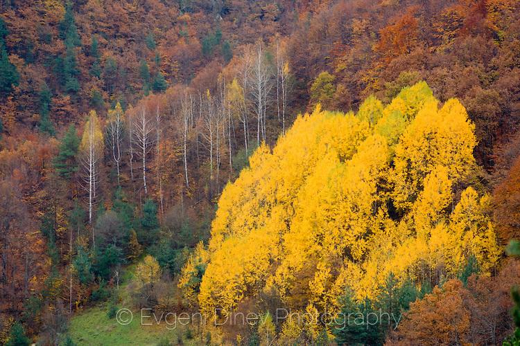 Пъстра есен