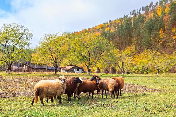 Задругата на овцете