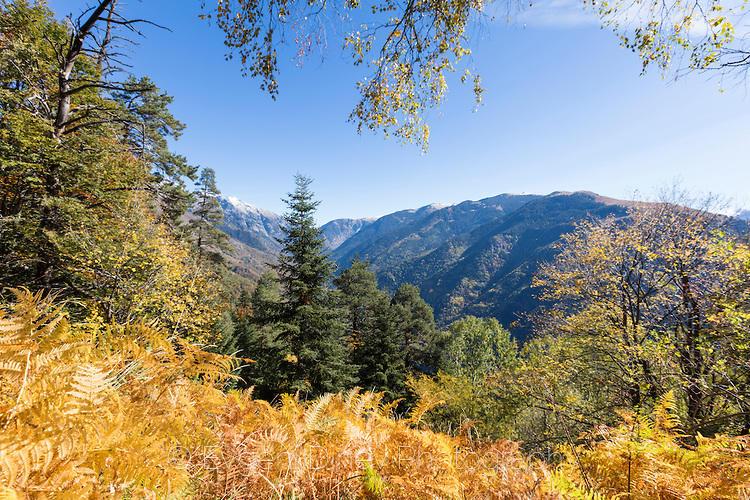 Риломанастирска гора есента