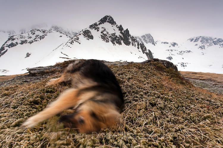 Кучешка радост