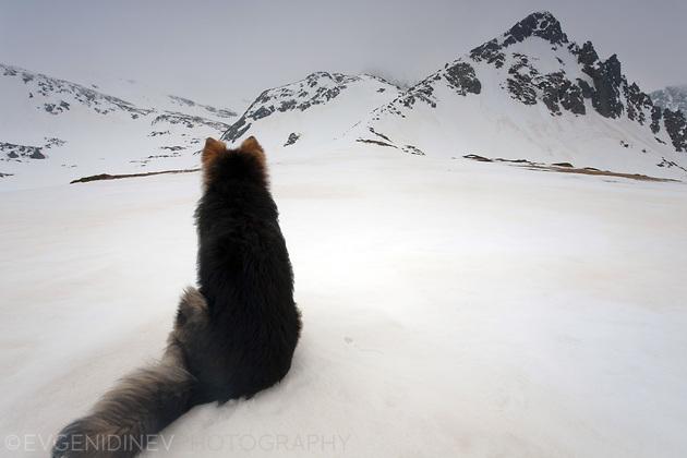 Кучето и върховете