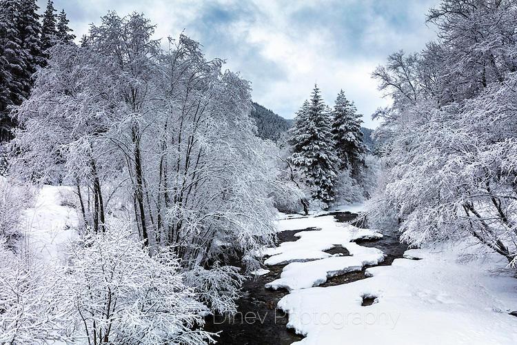 Заснежени дървета край река