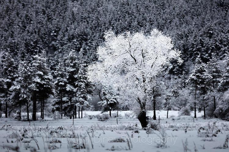 Кристално дърво