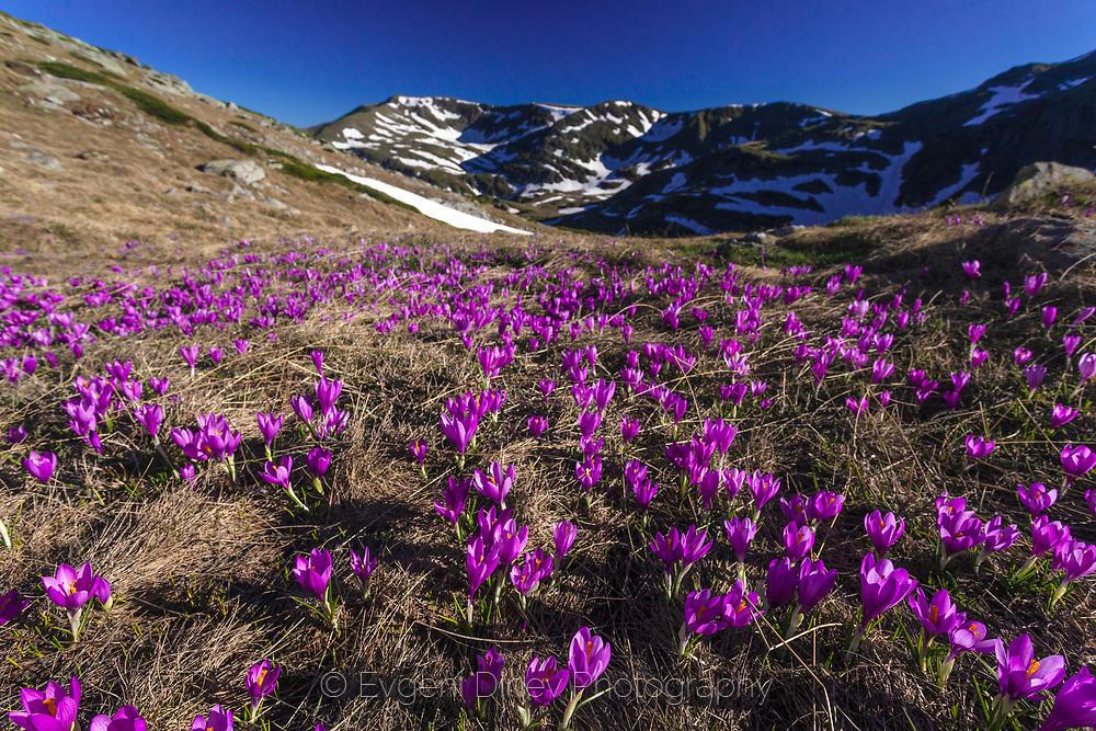 Виолетова долина