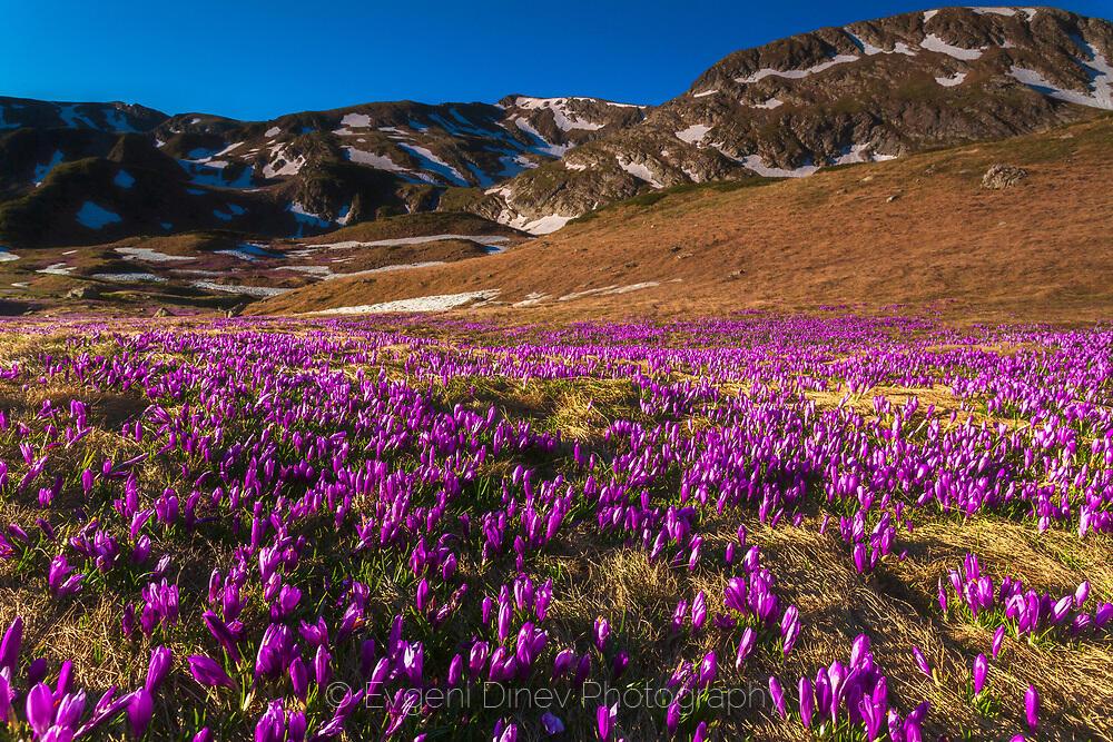 Пролетна Рила