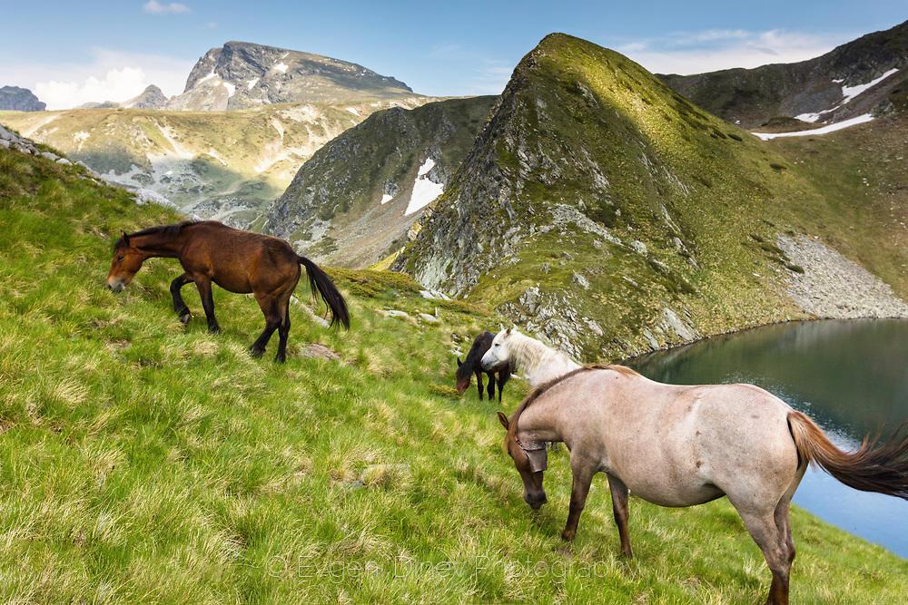 Свободно пуснати коне в Рила