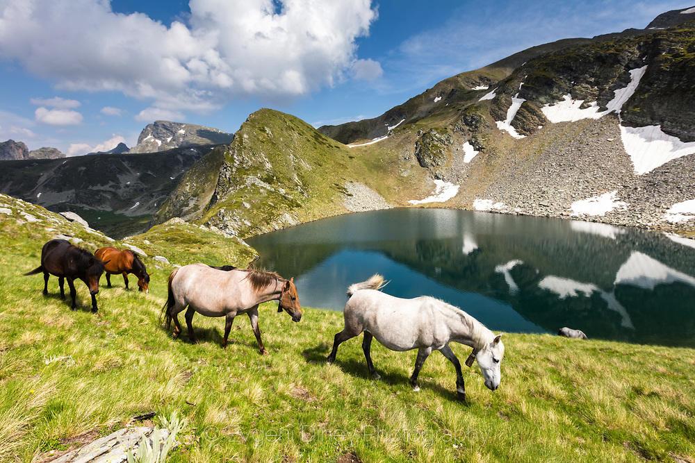 Стадо коне преминаващи край високо планинско езеро