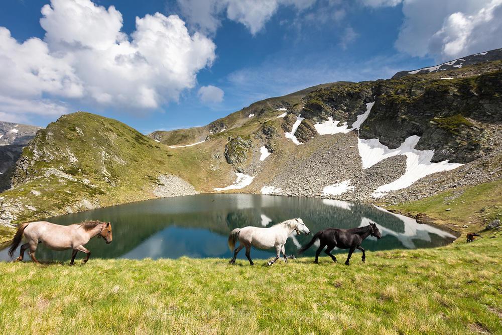 Стадо коне край езеро в Рила планина