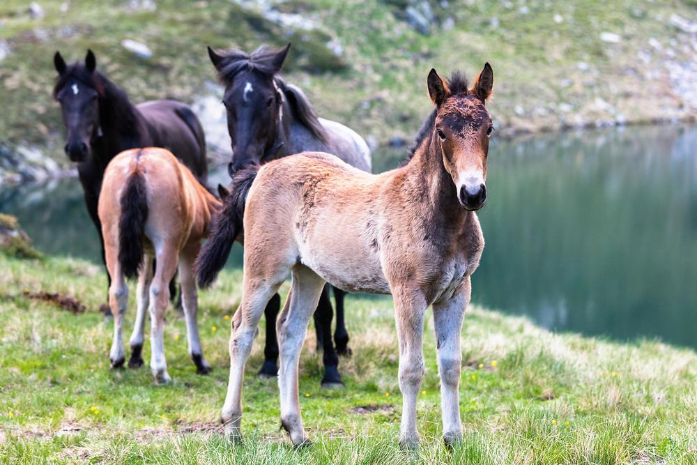 Млади кончета в Рила