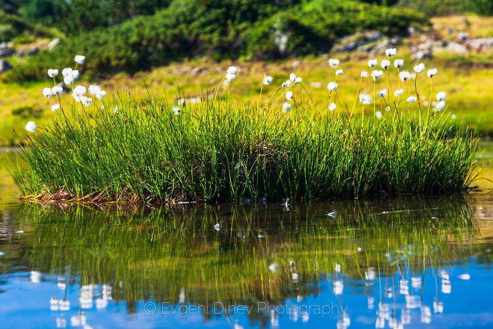 Бели цветчета на зелено островче