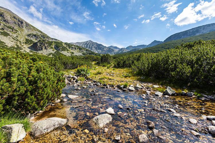 Река Бистрица