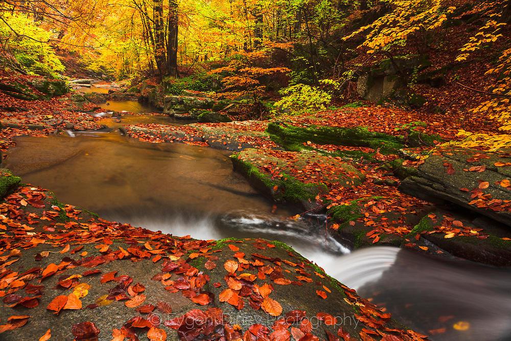 Есенни листа до реката