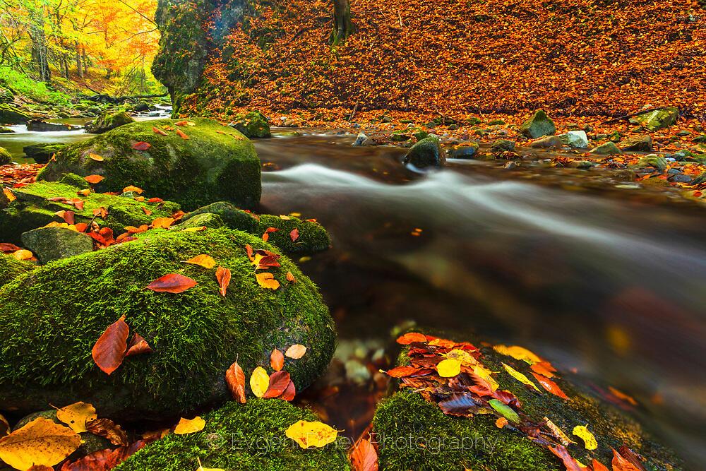 Есен в резерват Стенето
