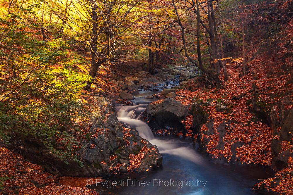 Цветна есен в Балкана