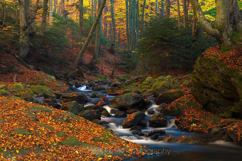 Стара Планина есента