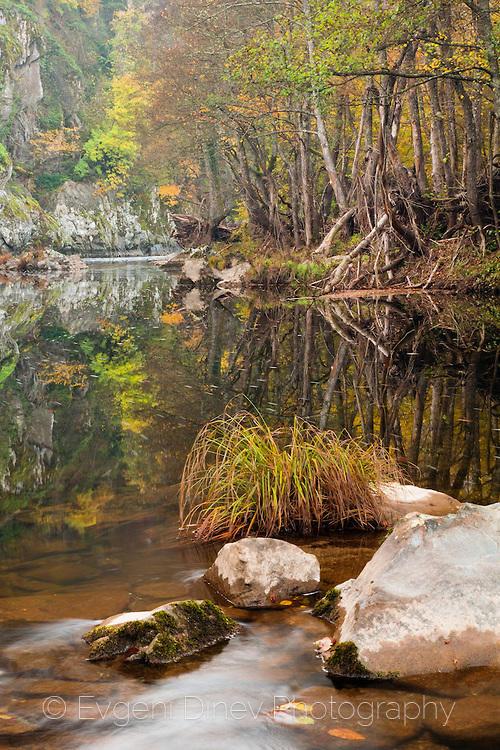 Царската река