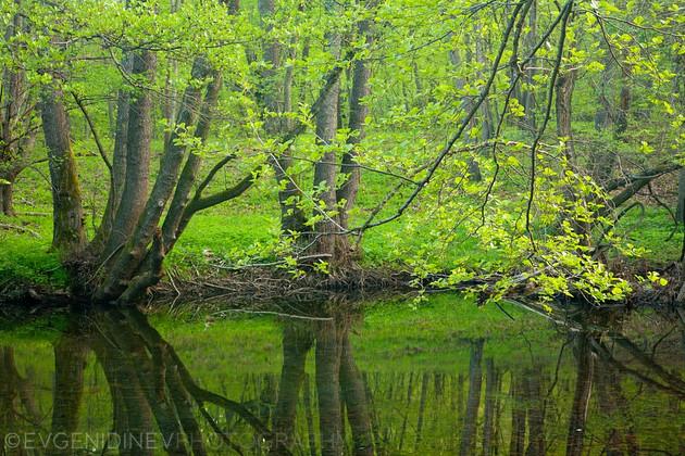 Зелена гора, зелена река