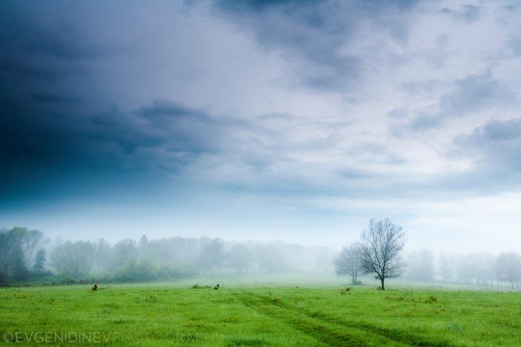Тучна пролетна поляна на Ропотамо