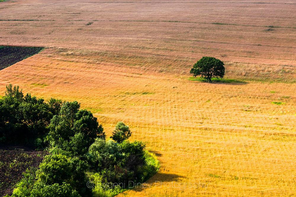 Дърво в златно поле